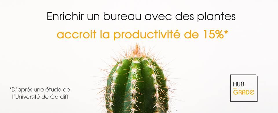 Les plantes au bureau - La productivité