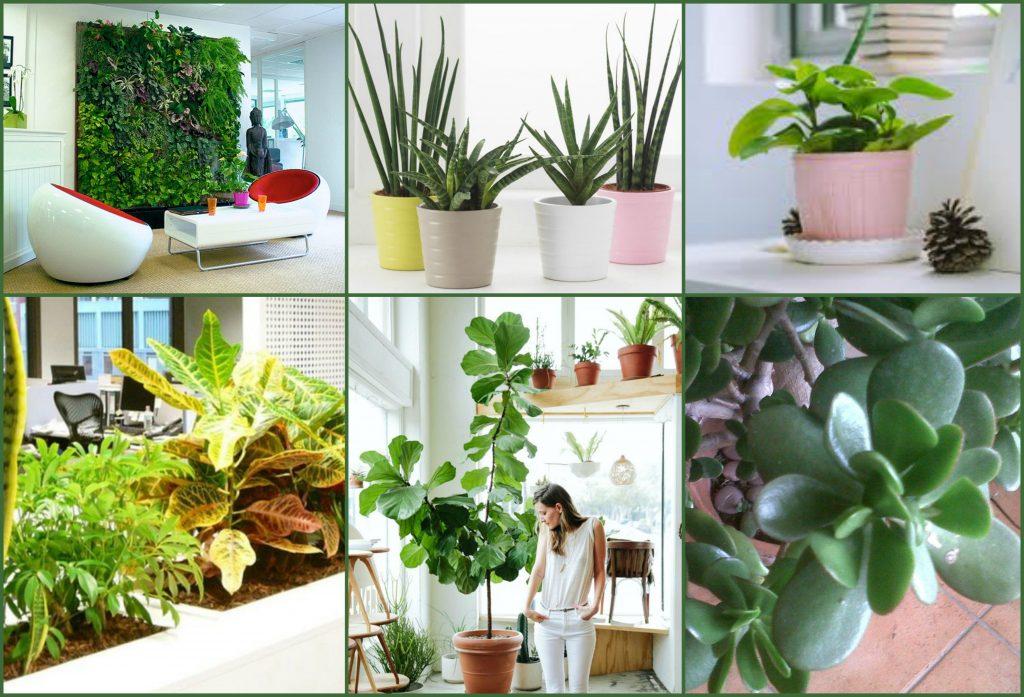 Les plantes au bureau - Quelles plantes choisir ?