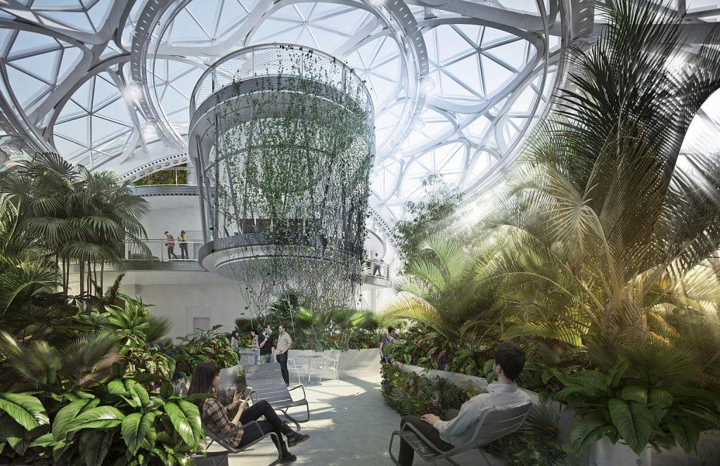 Les plantes au bureau - La biosphère d'Amazon