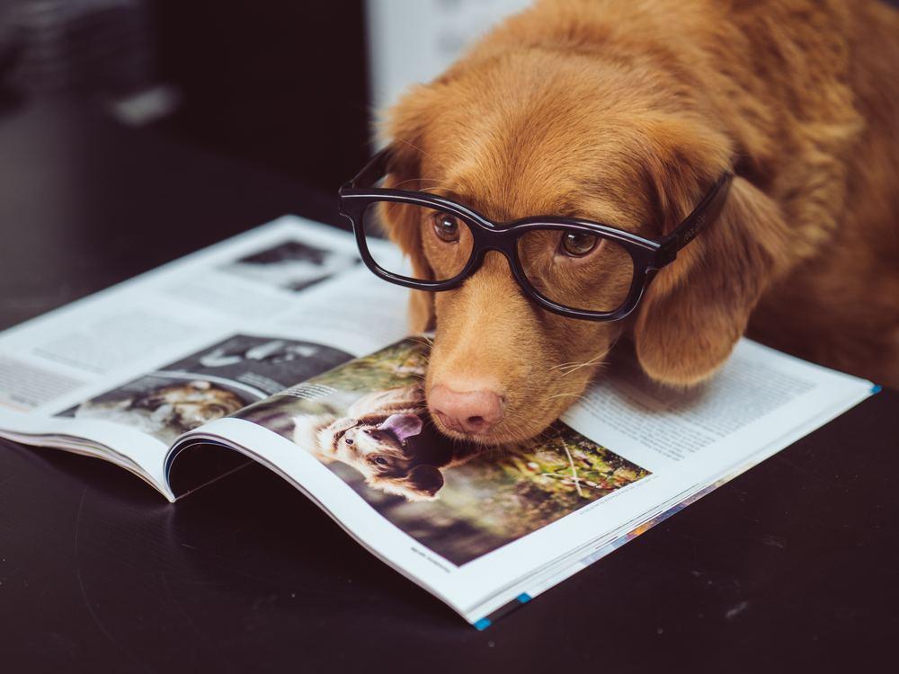 Quels bénéfices de la présence d'animaux pour l'entreprise ?